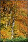 scottish autumnal colours by Karen Redfern