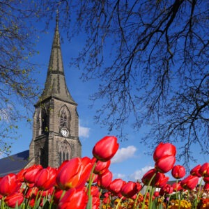 church and tulips by Margaret Quayle