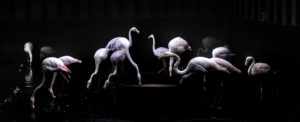 The Ballet Birds