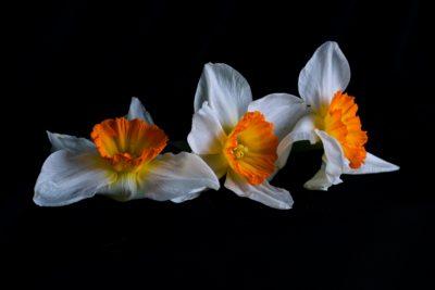 A trio of flowers