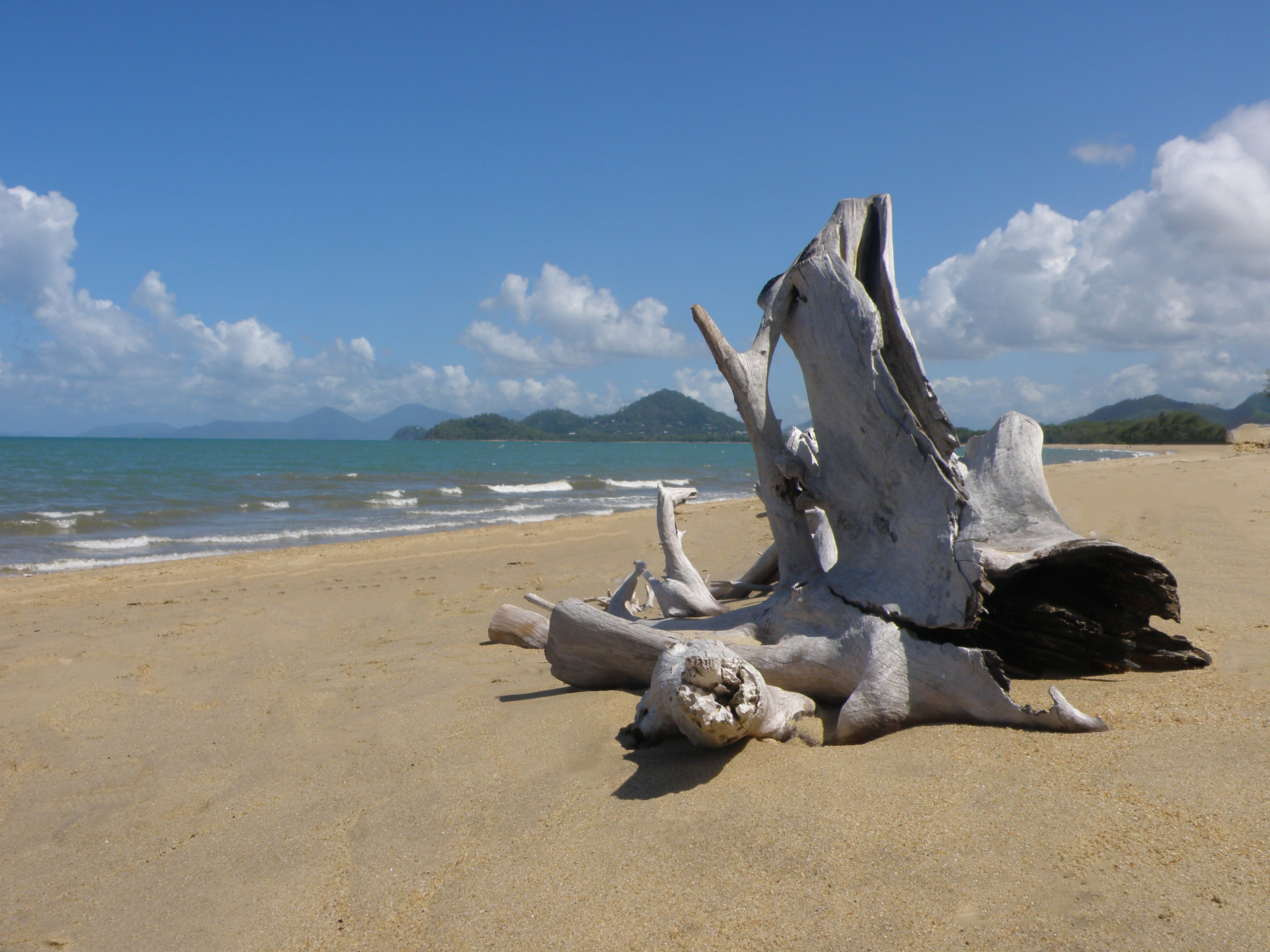 Driftwood in Paradise - some driftwood on a beach