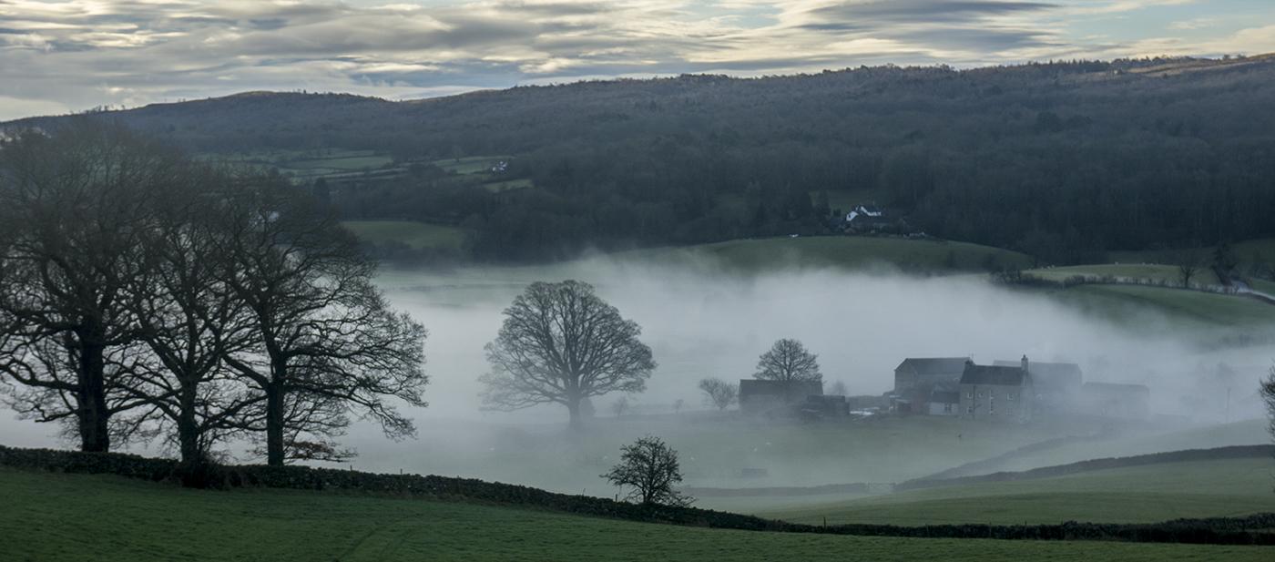 Low Mist