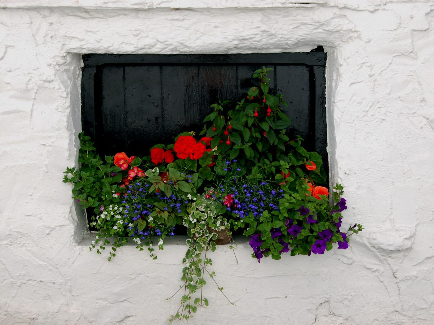 window box delight